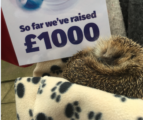 Hedgehog charity raises £1,000 through Lincs Lotto
